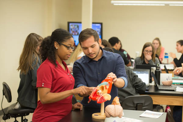 Physical therapy students examining a 3D model of the human body